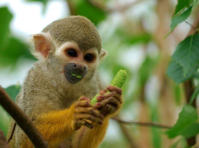 titi-maymunlari.jpg