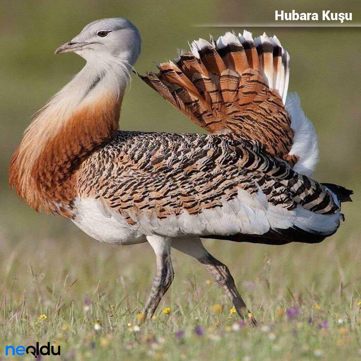 Türkiye nesli tükenen hayvanlar