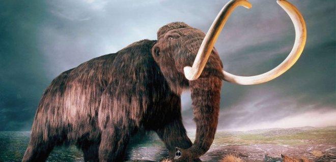 tuylu-mamut
