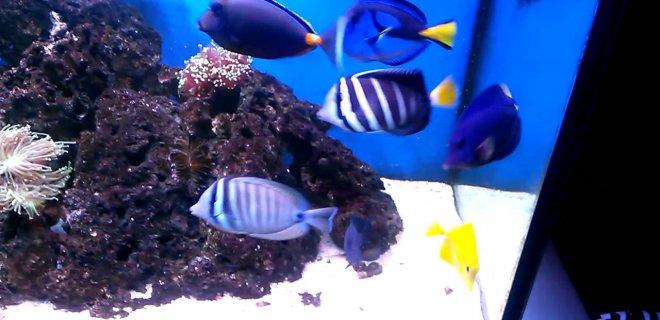 Tuzlu Su Balıkları