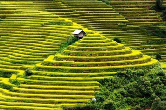 vietnam-pirinc-tarlalari.jpg
