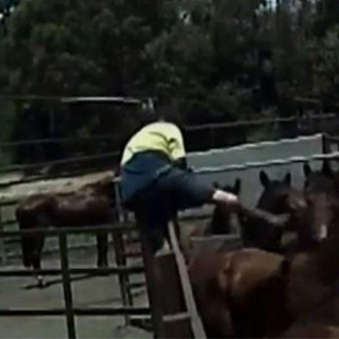 Yaşlı ve Hasta Atlar Öldürülmeye Gönderiliyor