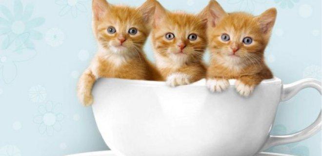 yavru-kedi.jpg