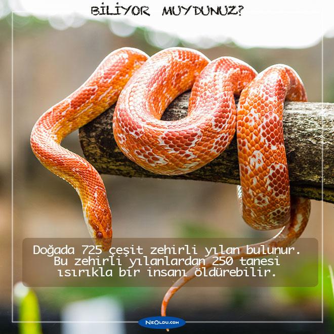 yilan-hakkinda-bilgi-2.jpg