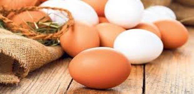 yumurta-016.jpg