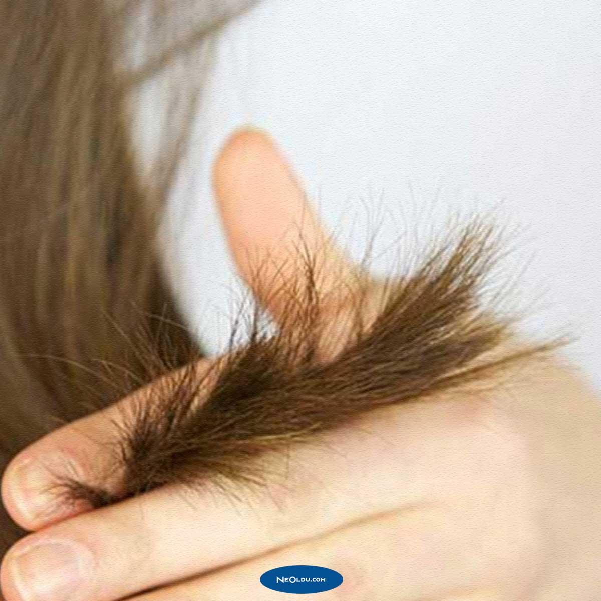 zeytinyağı saç bakım