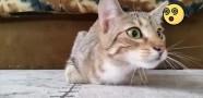 Sapık Filmini İzleyen Kedi